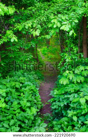 Forest entrance - stock photo