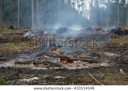 Forest felled trees and burned at the stake - stock photo