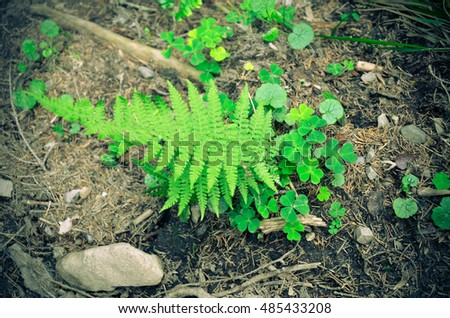 Forest ferns and moss green . Grows on rocky ground.