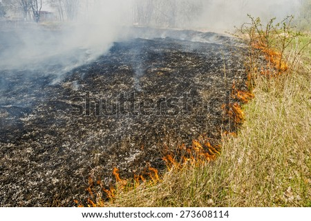 Forest fire devours dry grass and leaves behind a black ash - stock photo