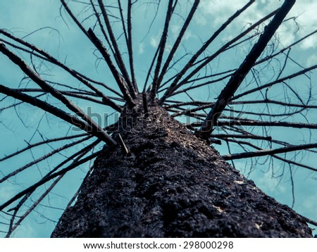 Forest Fire Image Of A Burned Tree - stock photo