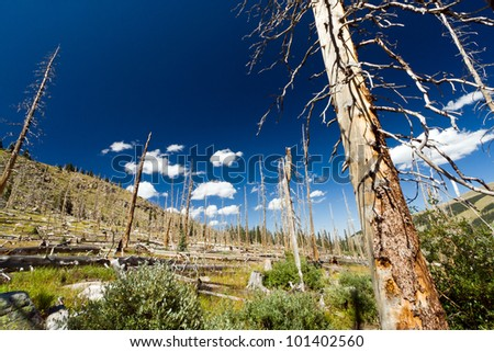 Forest fire leaves behind dead trees in the Colorado Rocky Mountains - stock photo