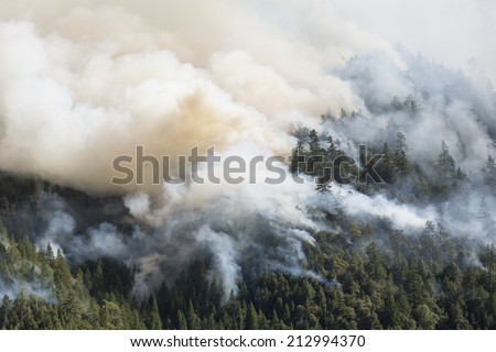 Forest fire, Northern California Lodge Fire, Mendocino County, August 2014, with huge flame. - stock photo