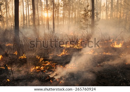 Forest fire on sunset background. Whole area covered by flame and smoke - stock photo
