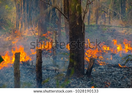 Forest fire, Wildfire burning tree in red and orange color at afternoon in the forest with smoke and flames. pollution,  North Thailand.
