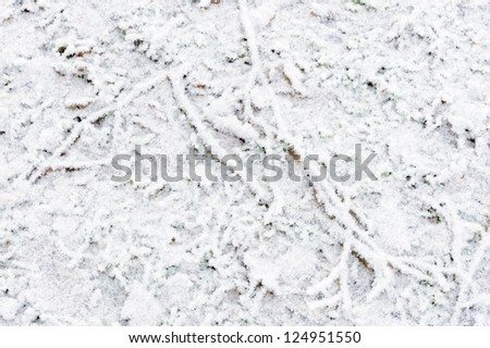 Forest floor covered in snow during winter - stock photo