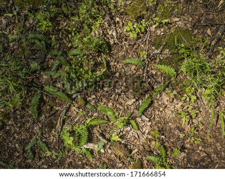 Forest floor covered with natural herbs, lichen, ferns, moss. Abundance of vegetation. Nobody. - stock photo