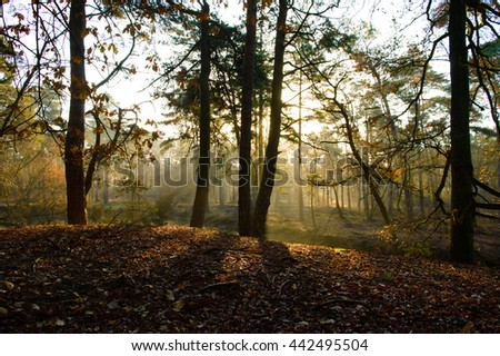 Forest floor with early morning sunlight coming through trees and highlighting fallen leaves - stock photo