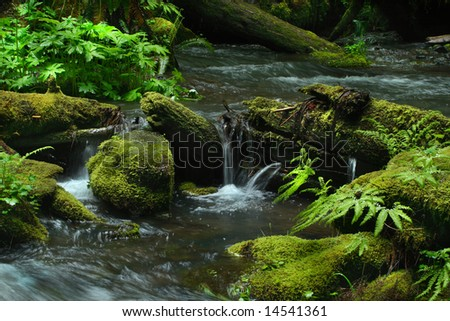 Forest foliage displaying vibrant green along an Oregon stream.