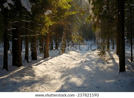 forest footpath in the winter sunny day - stock photo