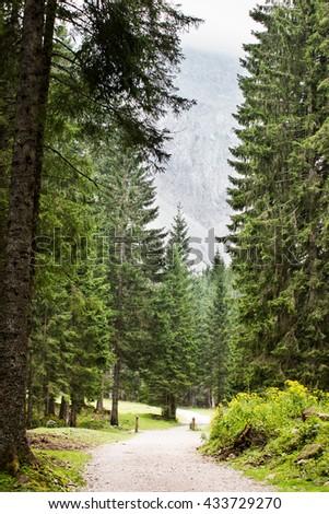Forest, Footpath, Single Lane Road, Woodland,  - stock photo
