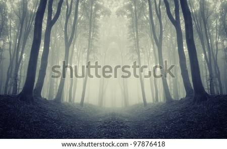 forest frame with symmetrical trees - stock photo
