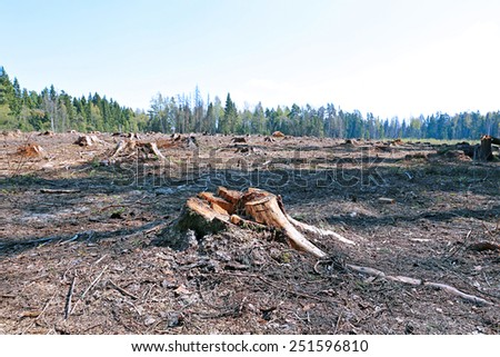 Forest glade after the felling of trees in Russia - stock photo