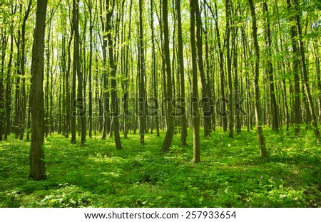 forest green - stock photo