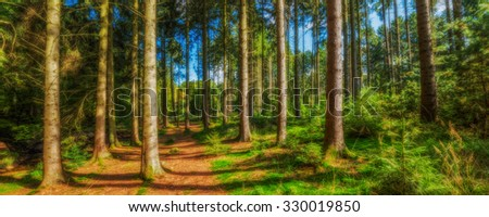 Forest HDR - stock photo