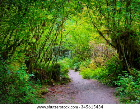 Forest Hiking Trail.  Olympic National Park Washington.  USA - stock photo