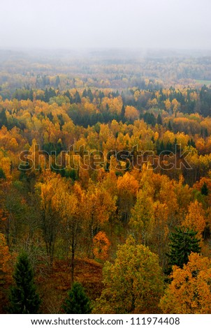forest hills covered with mist in fall - stock photo