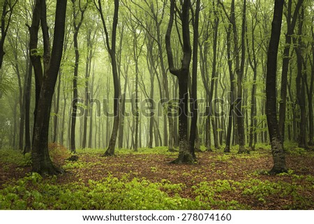 Forest in a spring day - stock photo
