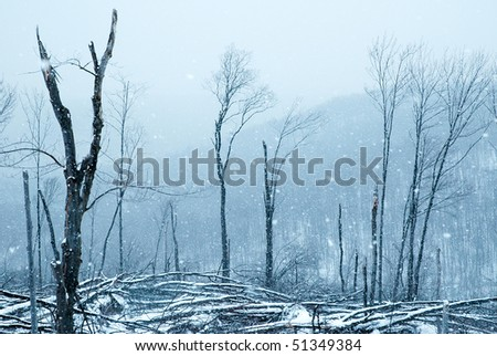 forest in a winter storm
