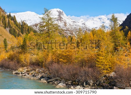 Forest in autumn in a alp valley