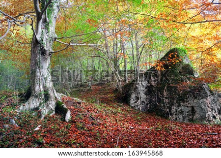 forest in autumn with a tree and a rock