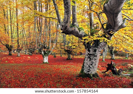forest in autumn with vivid colors - stock photo