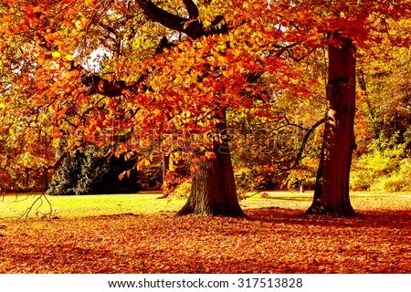 Forest in Bright Fall Colors