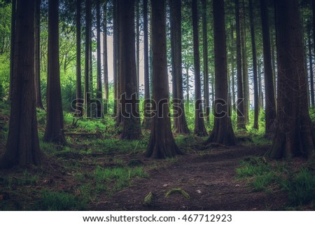 forest in cornwall idless uk england.