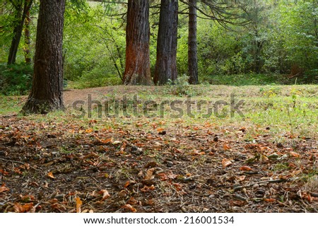 Forest in early autumn - stock photo