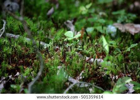 Forest In Early Morning: Ground Cover