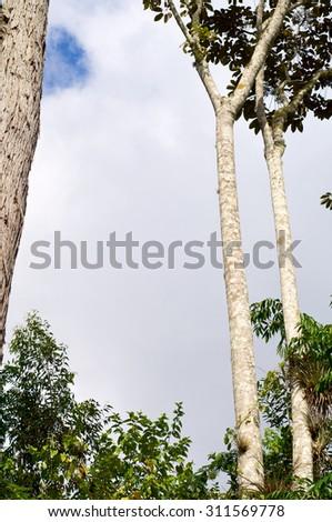 Forest in Escambray Mounatins, Villa Clara Province, Cuba. - stock photo