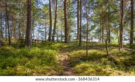 Forest in Filand at sunny day - stock photo