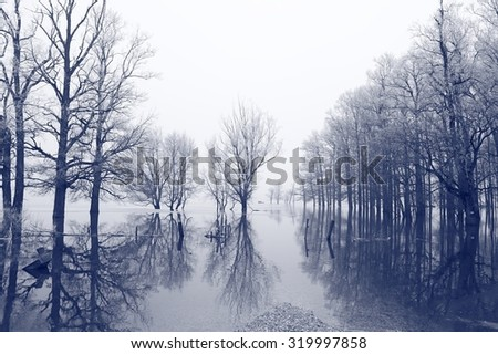 Forest in flood - stock photo
