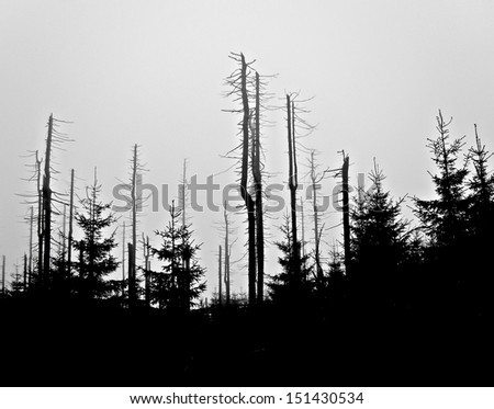 Forest in Harz National Park before sunrise - stock photo
