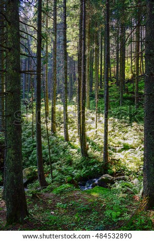Forest in High Tatra Mountains, Slovakia