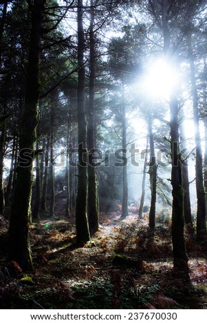 Forest in Mountain Range in Misty Weather