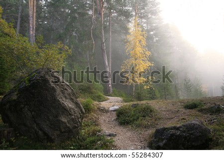forest in mountains - stock photo