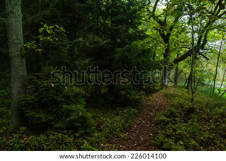 forest in Mueritz National Park in Germany