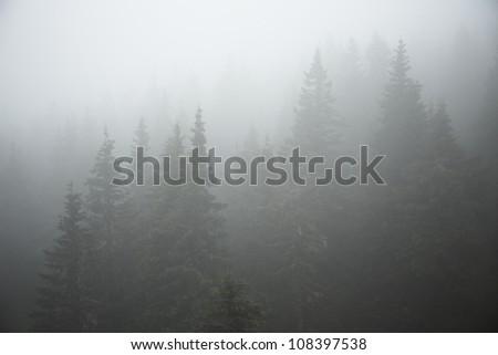 Forest in mystery fog, Czech Republic - stock photo