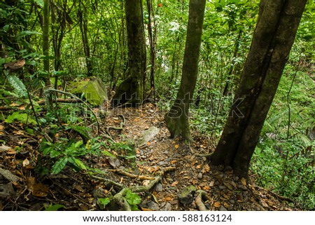 Forest in Phuket, Thailand