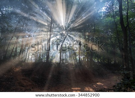 forest in rays of soft light - stock photo