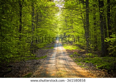 Forest in spring - stock photo