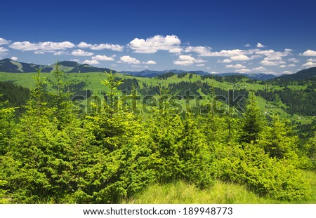 Forest in summer time. Beautiful natural landscape