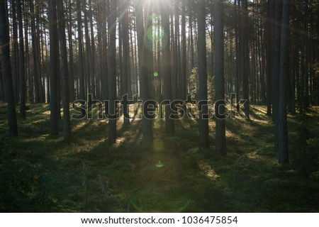 forest in summer time in the evening sunset