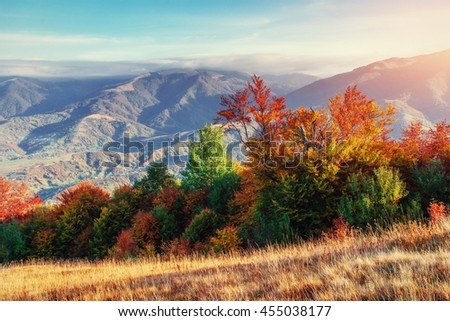 Forest in sunny afternoon while autumn season. Carpathians. Ukraine, Europe