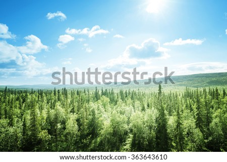forest in sunny day - stock photo