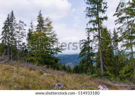 forest in the Carpathian mountain views