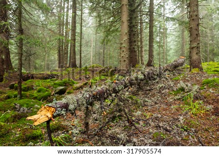 Forest in the Carpathian mountains, fallen down tree - stock photo