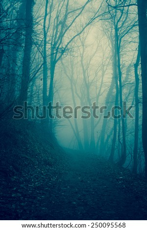 Forest in the mist - stock photo