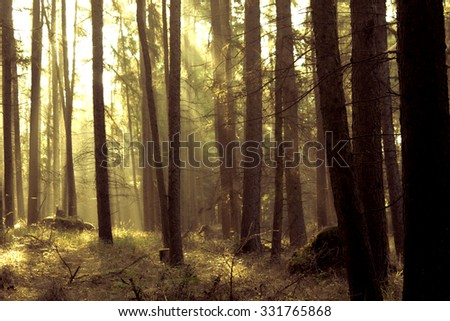 Forest in the Morning Light